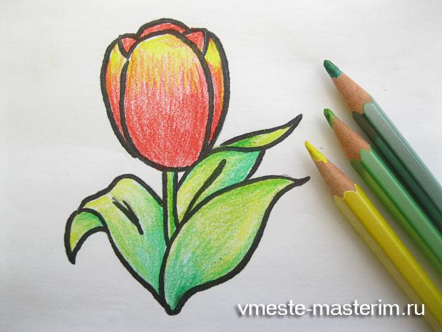 как нарисовать тюльпан поэтапно