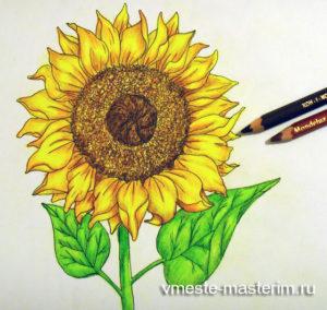 Как нарисовать подсолнух поэтапно карандашом