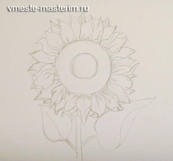 Как нарисовать подсолнух карандашом для детей