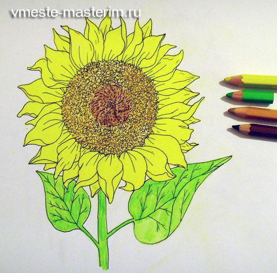 Как нарисовать листья подсолнуха
